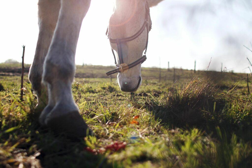 Horse in a field in Emmett