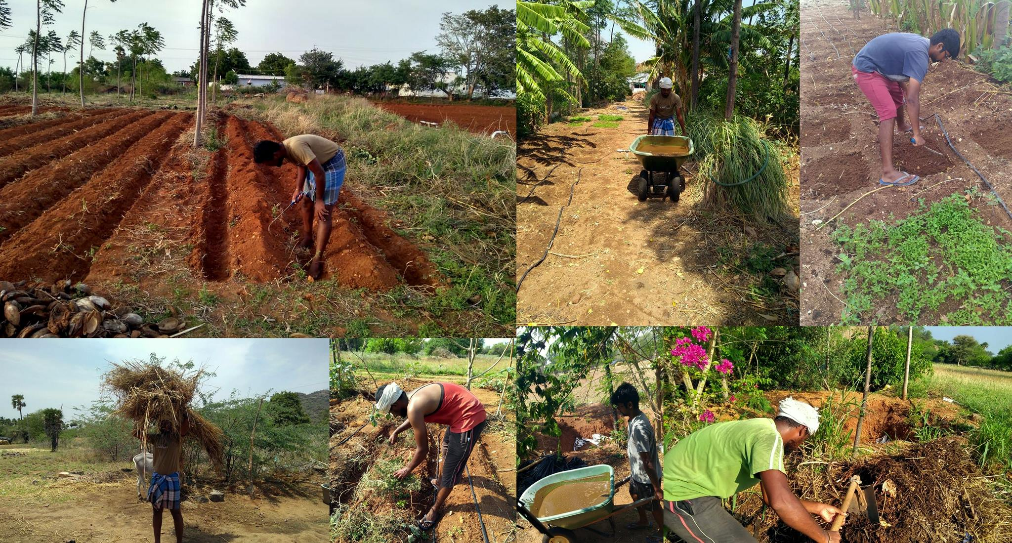 Farm Internship Program (FIP)