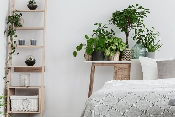 18 Plants That Help You Sleep Better Than Ever