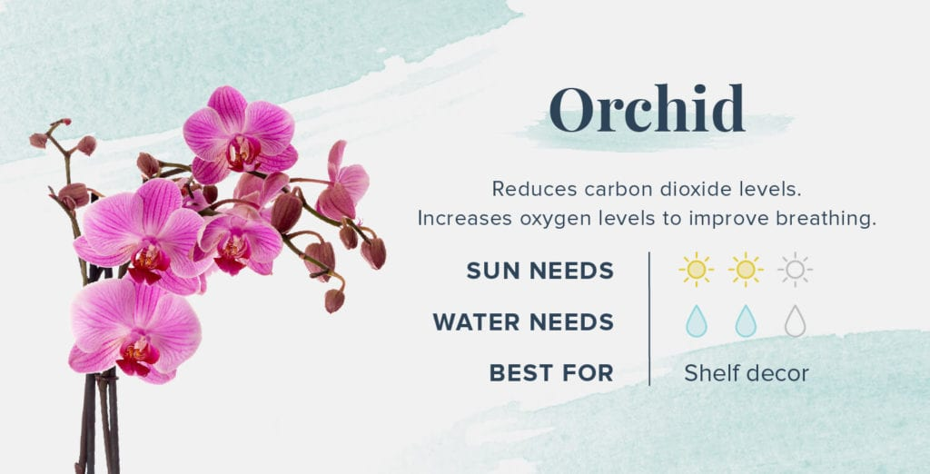 Plants That Help You Sleep Better - Orchid