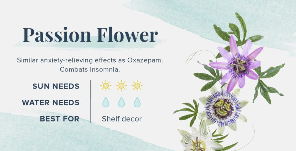 Plants That Help You Sleep Better - Passion Flower