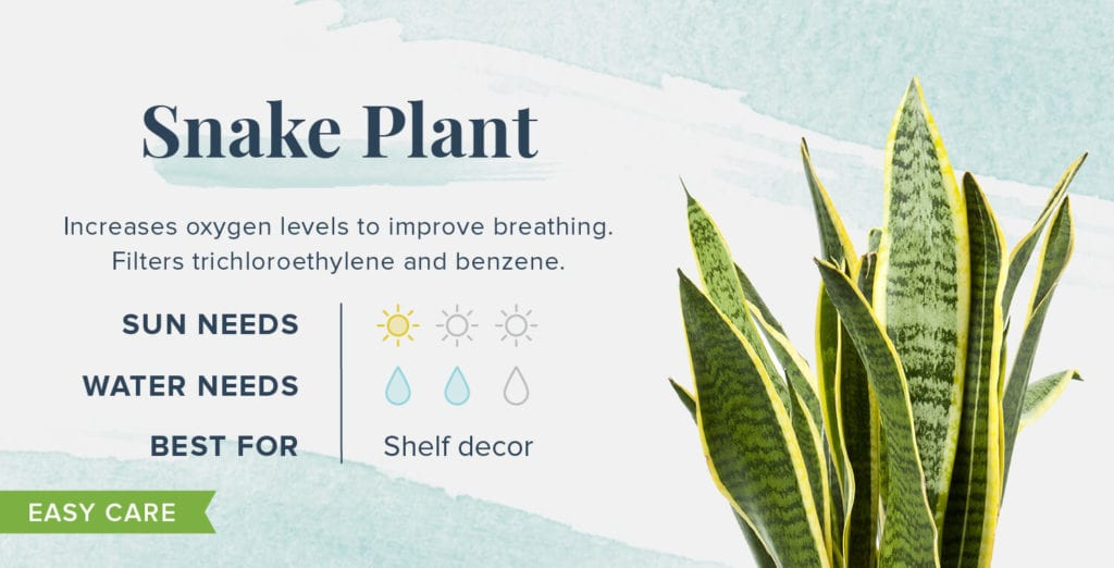 Plants That Help You Sleep Better - Snake Plant