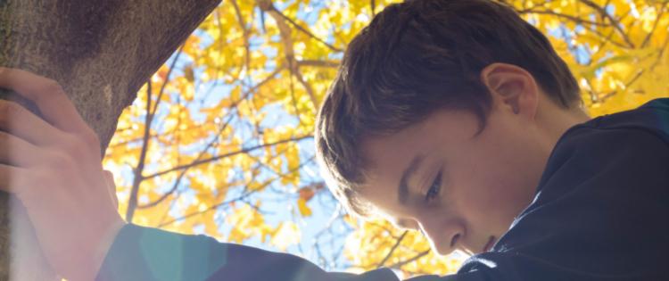 Child climbing a tree in autumn