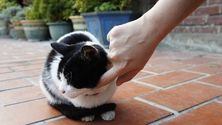 cat-75972__180