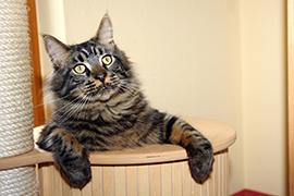 cat-playful-270-x-180