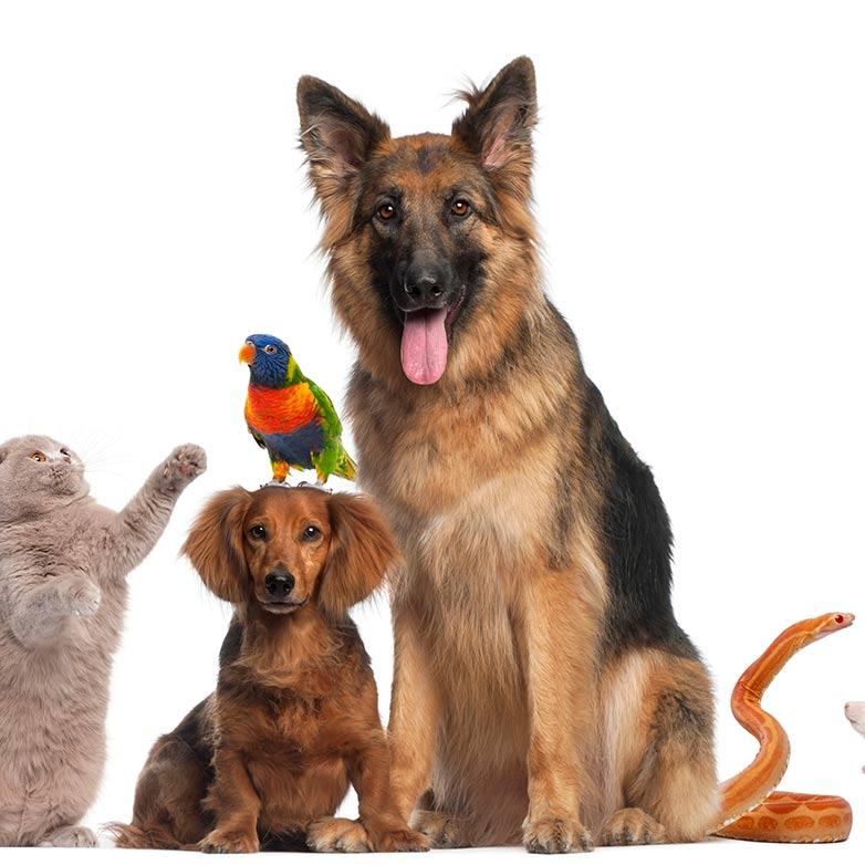 Animal Communication Level I