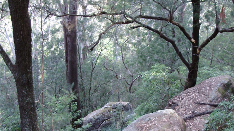 Old Mans Valley bushland