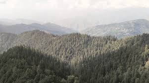 Himachal Pradesh records 25 percent increase in its green cover
