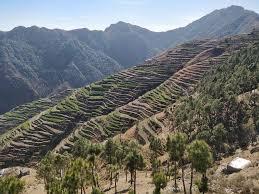 रोहित के उजड़े खेतों में हरियाली लाई मुख्यमंत्री खेत संरक्षण योजना