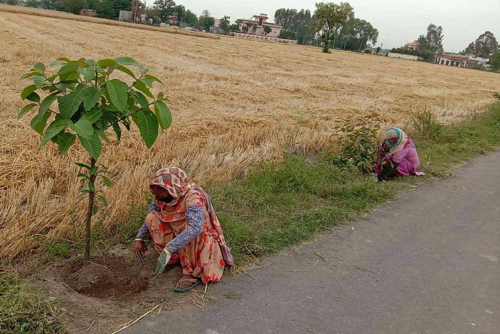 1780 Van Mitras Project 4.89 Lakh saplings in Villages of Jalandhar Distt : Ghanshyam Thori