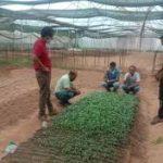 जाइका परियोजना के पॉलीहाउसों के कारण बढ़ रहा है सब्जी उत्पादन