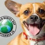 WAP launches report—All Eyes on Dogs—on World Rabies Day.