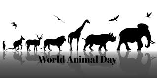 World Animal  Protection today