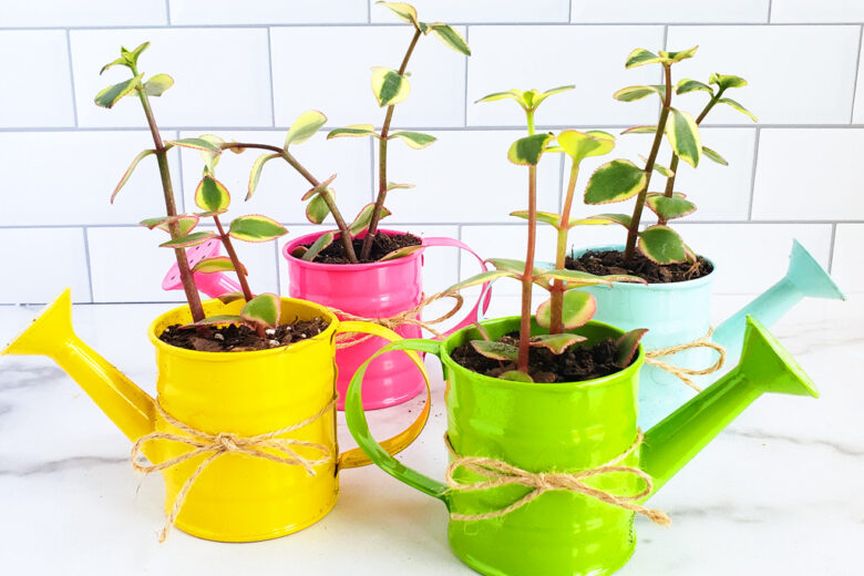 How to Make a DIY Succulent Gift for Mother's Day. Succulent garden in mini colorful watering cans. Perfect for Mother's Day, Grandparents Day, or Teacher's Appreciation Day. Littleeatsandthings.com