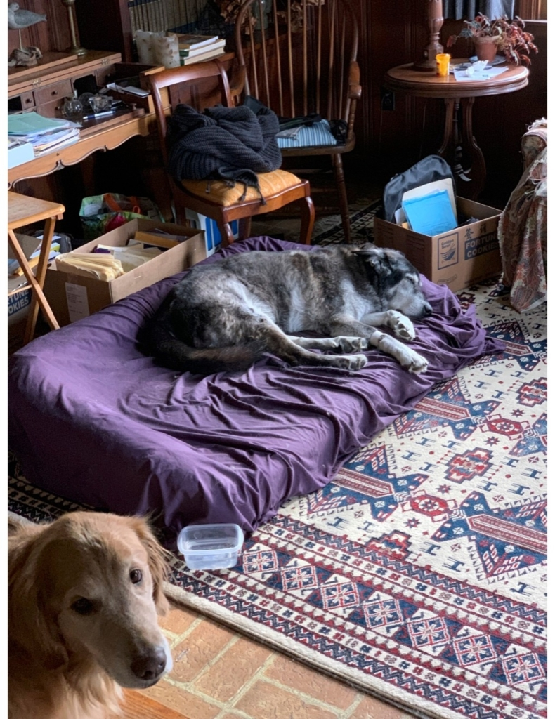 Fifteen-year-old Beasty at home with his 8-year-old pal Emma at his side.