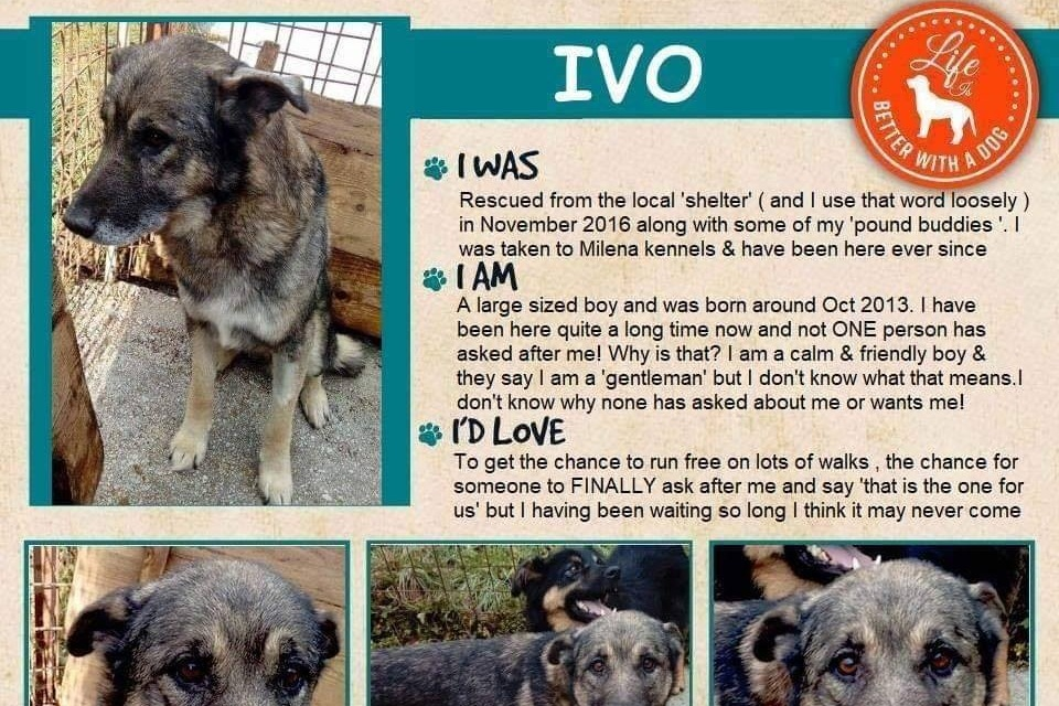 Ivo is a male we're considering for adoption.