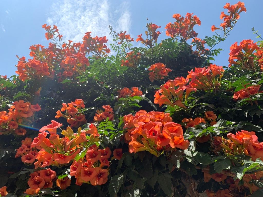 Not surprisingly, the flowers in Naxos are as stunning as the rest of the scenery.