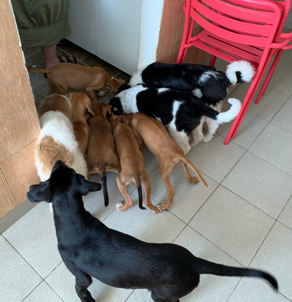 Some of the puppies in Milena's flat