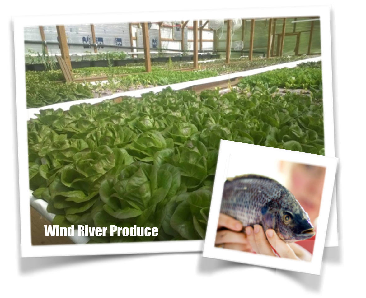 Wind River Produce Lettuce with fish
