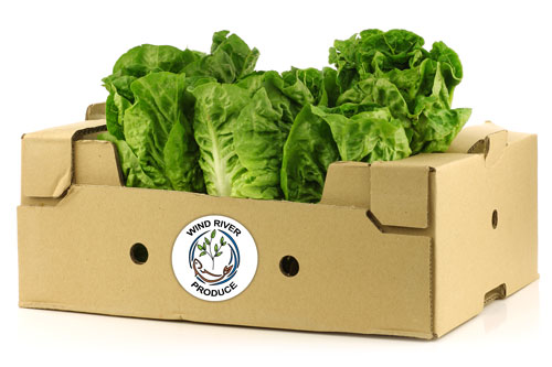 Wind River Produce fresh lettuce delivery
