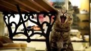 Explore Hiroshima's backstreet from a cat's eyes