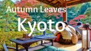 kyoto-autumn-feature-image