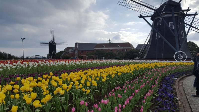 Huis Ten Bosch Flowers