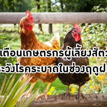 แจ้งเตือน!! เกษตรกรผู้เลี้ยงสัตว์ปีก ระวังโรคระบาดในช่วงฤดูฝน