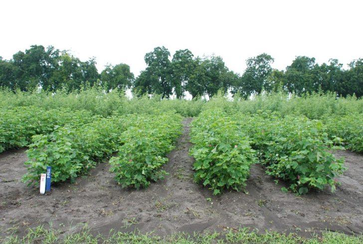 """ปัดฝุ่น…กฎหมายคุ้มครองพันธุ์พืช เอื้อบริษัทข้ามชาติ """"ผูกขาด"""" เมล็ดพันธุ์ ?"""