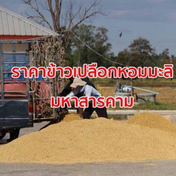 สหกรณ์การเกษตร รับซื้อข้าวเปลือกหอมมะลิราคาขั้นต่ำตันละ 10,000 บาท