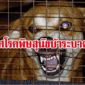 ด่วน! มหาสารคาม ประกาศเขตโรคพิษสุนัขบ้าระบาดหนัก!!