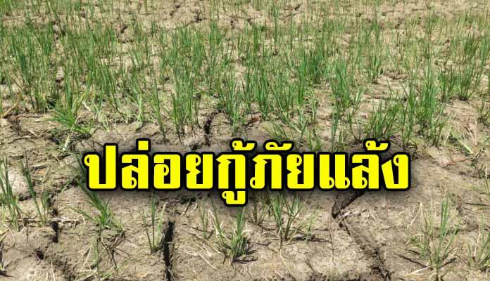 ธ.ก.ส.จัดเงินกู้ 5.5 หมื่นล้านบาท ช่วยเกษตรกรประสบภัยแล้ง ชูสินเชื่อฉุกเฉินดอกเบี้ย 0% ปีแรก