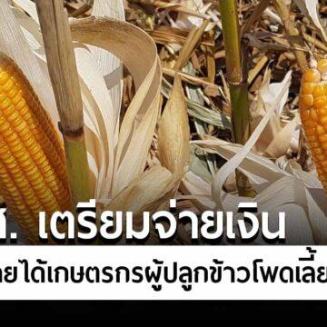 ธ.ก.ส. เตรียมจ่ายเงินประกันรายได้แก่เกษตรกรผู้ปลูกข้าวโพดเลี้ยงสัตว์ วงเงิน 1,800 ล้านบาท เริ่มจ่ายเงินรอบแรก 20 พฤศจิกายนนี้