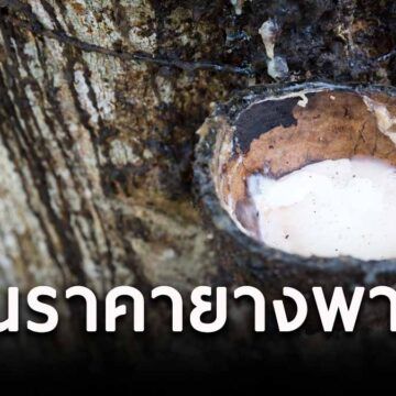 """""""จุรินทร์"""" ดันราคายางพารา ลุยจัด Thailand Rubber Expo ธันวาคมนี้"""