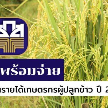 ธ.ก.ส. ดีเดย์ 16 พ.ย. เริ่มจ่ายเงินประกันรายได้เกษตรกรผู้ปลูกข้าว ปี 2563/64