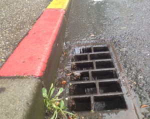 photo_street storm drain_cropped_squarish