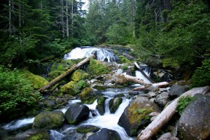 Carbon_River_(Washington)