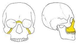 Facial Trauma - Charlotte, Concord, and Denver, North Carolina