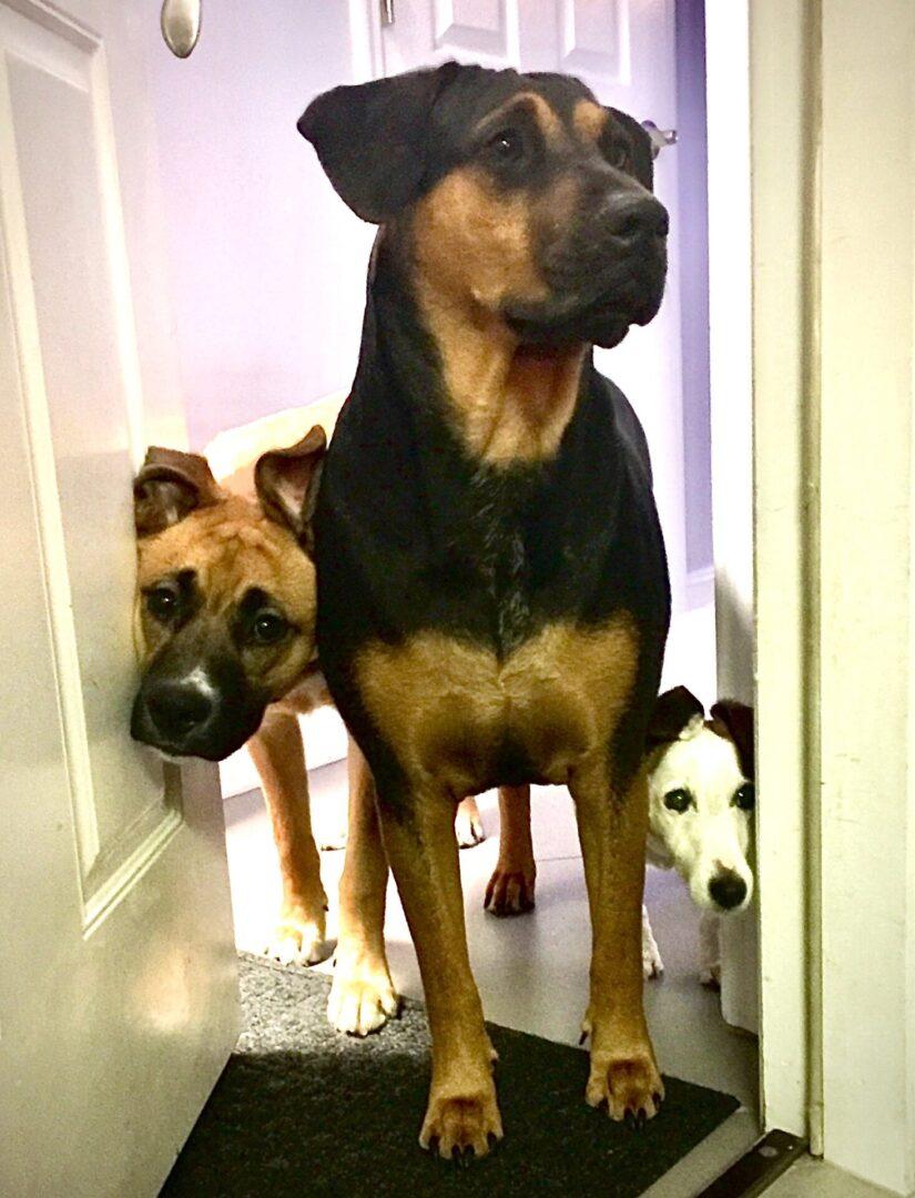 triodogs