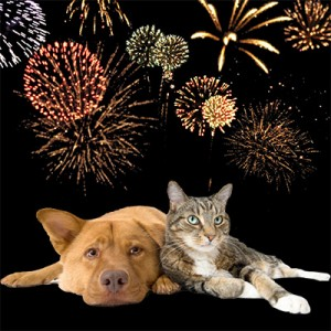 dog-cat-fireworks