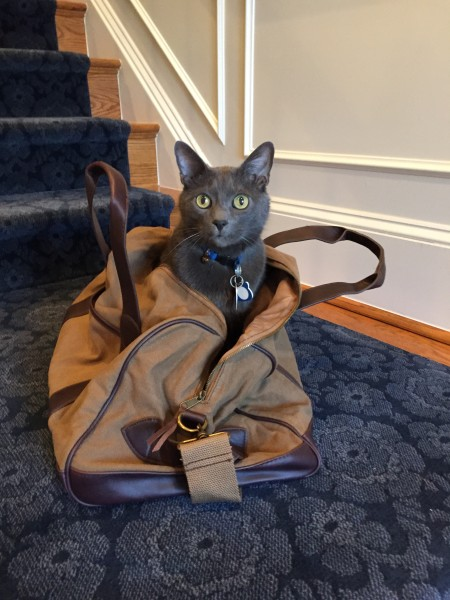 Beaudelaire, our cat, inside our travel bag