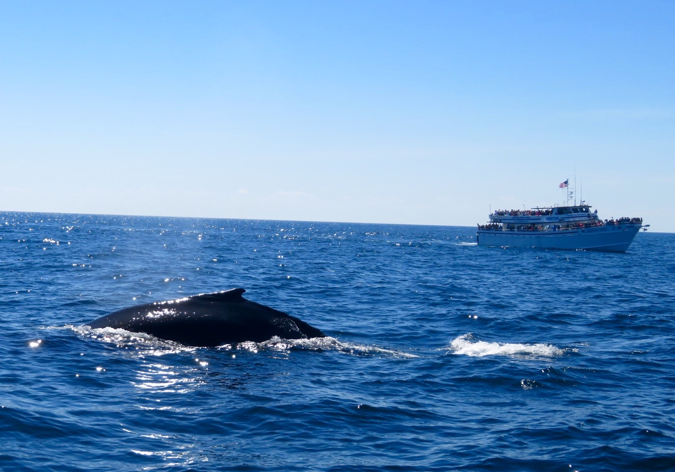 Emerson Inn by the Sea : Whale Watching out of Gloucester MA