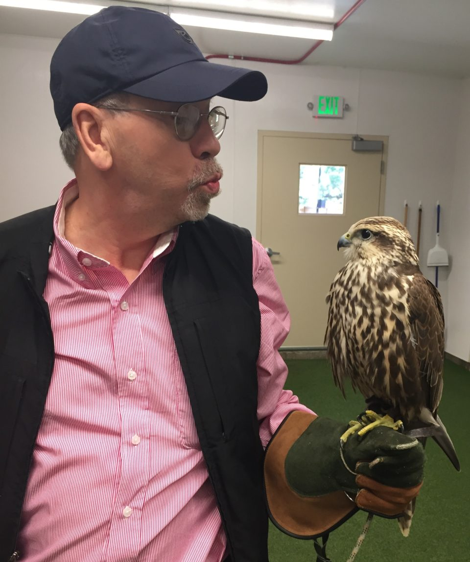 Denis and his new love ... Chase the Saker Falcon !