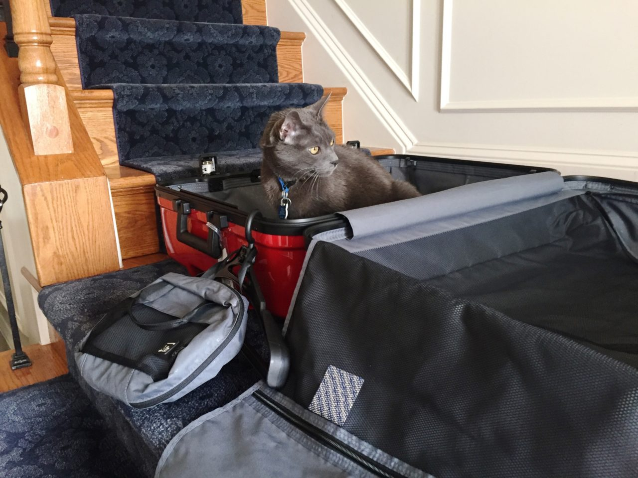 Lojel Luggage ~ Everyone loves the inside layout and accessories of the Novigo suitcase