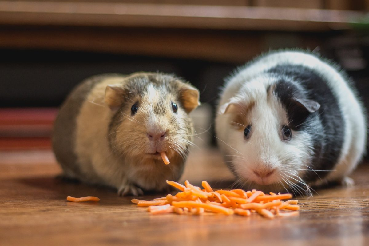 Slow Bulk: How to Minimize Fat Gain While Bulking