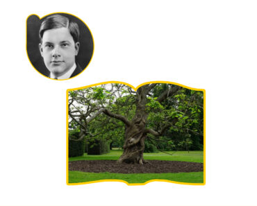 Umair Zia's Nature Tutor_Joyce Kilmer