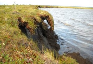 Eroding bank of a thermokarst lake in Old Crow Flats, Yk.