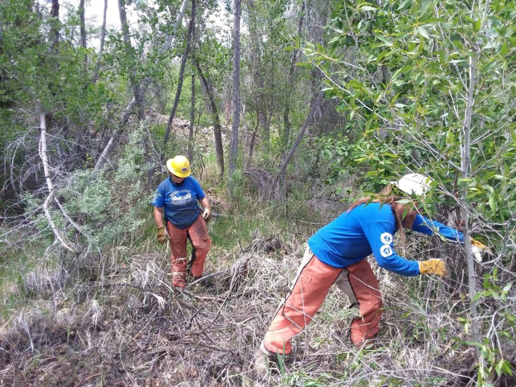 two people clear brush from a trail.