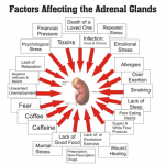 Factors-affecting-adrenals