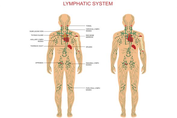 The Weight Gain-Lymph Connection Part 2